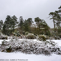 Buy canvas prints of Winter In The New Forest by Paul Chambers