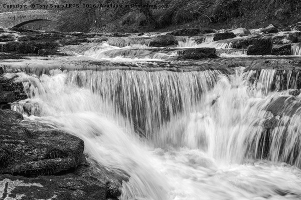 Stainforth Falls, Yorkshire Dales Canvas print by Tony Sharp LRPS