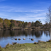 Buy canvas prints of Tarn Hows by Reg K Atkinson