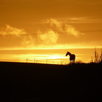Buy canvas prints of  Sunset Horse by Jackson Photography