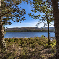 Buy canvas prints of  Cairngorm from Loch Morlich by Nicholas Rowland