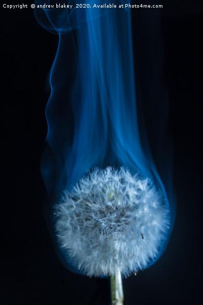 Dandelion smoke Canvas print by andrew blakey