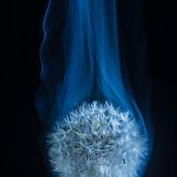 Buy canvas prints of Dandelion smoke by andrew blakey