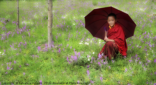 Tibetan flower Framed Mounted Print by Salvatore Valente