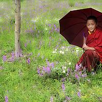 Buy canvas prints of   Tibetan flower by Salvatore Valente
