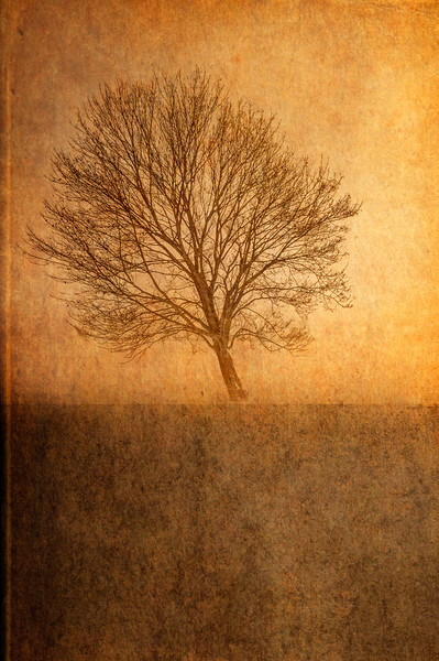 Single Tree Canvas print by Garvin Hunter