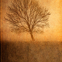 Buy canvas prints of Single Tree by Garvin Hunter