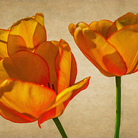 Buy canvas prints of Spring Flowers by Garvin Hunter