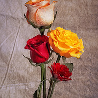 Buy canvas prints of Floral Print With Roses  by Garvin Hunter