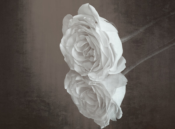 Rose Reflection Canvas print by Garvin Hunter