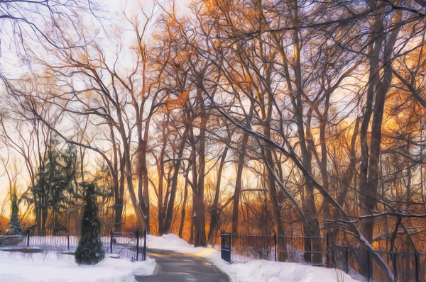 Golden Light Through the Trees Canvas print by Garvin Hunter