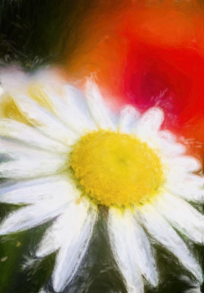 Daisy Canvas print by Garvin Hunter