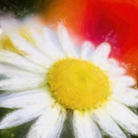 Buy canvas prints of Daisy by Garvin Hunter
