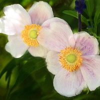 Buy canvas prints of Flowers in Tandem  by Garvin Hunter