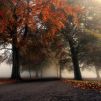 Buy canvas prints of Foggy Autumn Trees by Craig Doogan