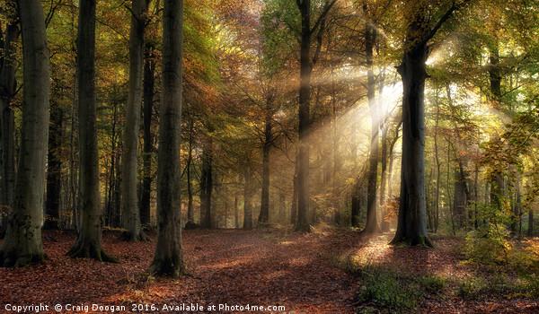 Autumn Forest Canvas print by Craig Doogan