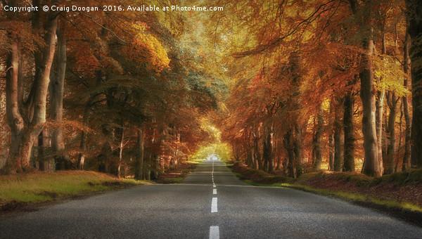 Autumn Drive Canvas print by Craig Doogan