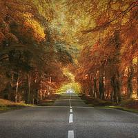 Buy canvas prints of Autumn Drive by Craig Doogan