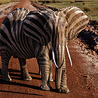 Buy canvas prints of Elephant Zelephant by Steve de Roeck