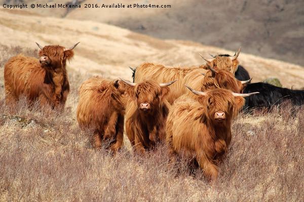 Highland Cattle Canvas print by Michael McKenna
