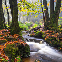 Buy canvas prints of Golitha Falls  by Michael Brookes