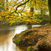 Buy canvas prints of Autumn at Golitha Falls by Michael Brookes