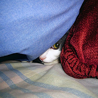 Buy canvas prints of Peek a Boo by Frankie Cat