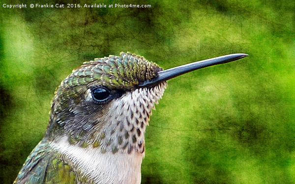 Little Hummer Canvas print by Frankie Cat