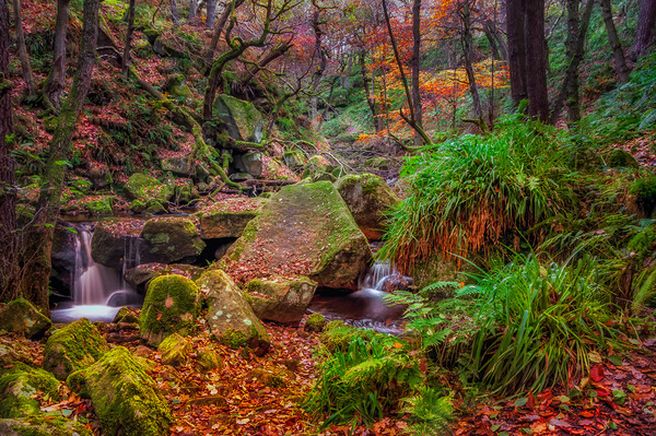 Padley Gorge Canvas print by Paul Andrews