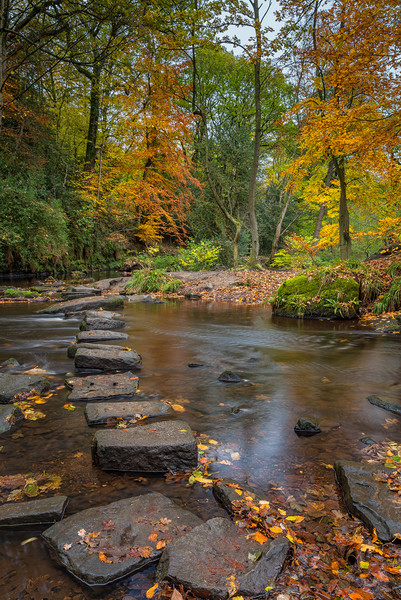 Rivelin Stepping Stones  Canvas print by Paul Andrews