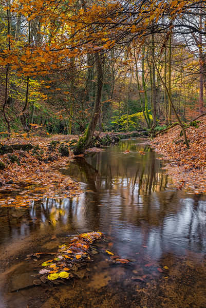 Autumn Leaves in Rivelin Canvas Print by Paul Andrews