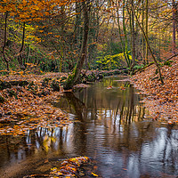 Buy canvas prints of Autumn Leaves in Rivelin by Paul Andrews