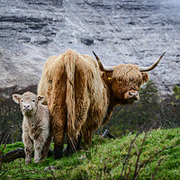Buy canvas prints of Highland Cow and Calf by Rosalind White