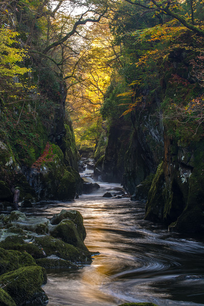 The Fairy Glen Canvas Print by Clive Ashton
