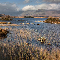 Buy canvas prints of Autumn sunlight on Lochan na h Achlaise by Chris Drabble