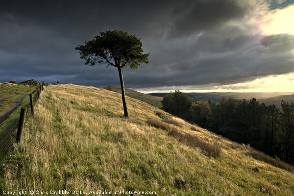 Lone tree on Back Tor, the Peakland Ridge, Derbysh Canvas print by Chris Drabble