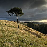 Buy canvas prints of Lone tree on Back Tor, the Peakland Ridge, Derbysh by Chris Drabble