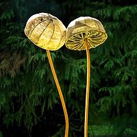Buy canvas prints of Two Little Shrooms by Susie Peek