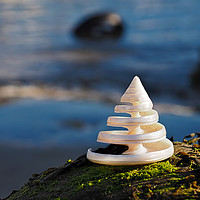Buy canvas prints of Spiralling Troca Shell by Susie Peek