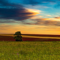 Buy canvas prints of Clover field and sunset sky. Rural landscape. Czec by Sergey Fedoskin