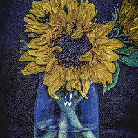 Buy canvas prints of Sunflower by Angela Aird