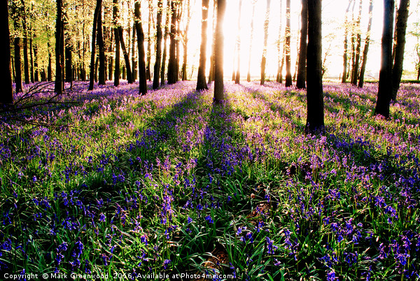 Shadowy Bluebell Woods Canvas print by Mark Greenwood