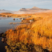 Buy canvas prints of Black Mount Morning by Mark Greenwood