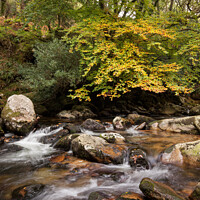 Buy canvas prints of The River Plym in Dewerstone Woods by Bruce Little