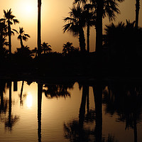 Buy canvas prints of Sunset Palm Trees by Adrian Susman