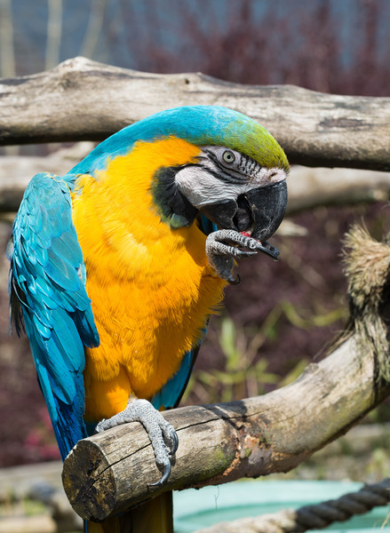 Parrot Canvas print by Tony Bishop