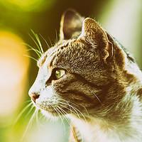 Buy canvas prints of Domestic Cat Profile Portrait by Radu Bercan