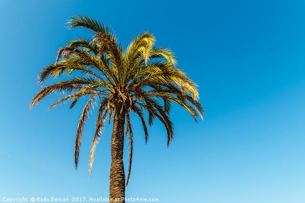 Green Palm Tree On Blue Sky Canvas print by Radu Bercan