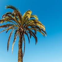 Buy canvas prints of Green Palm Tree On Blue Sky by Radu Bercan