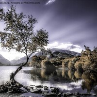 Buy canvas prints of Lone tree by Kevin Elias